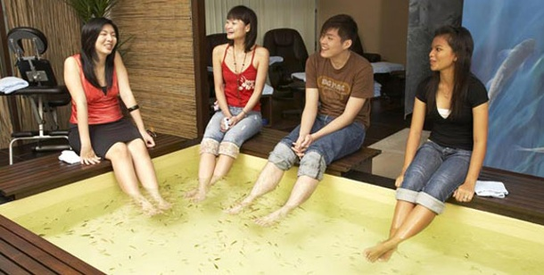 . Singapur: Fischmassage (Foto: Singapore Tourism Office)