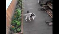 Ganz der Gentleman: Hund trgt Katze in Wohnung. (Screenshot: Zoomin)