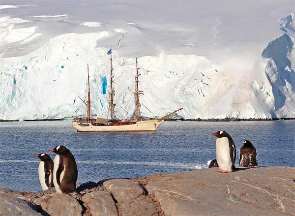 Eselspinguine vor Port Lockroy. (Quelle: SRT /Christian Nowak)