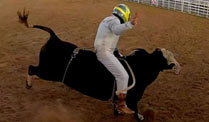 Mercedes-Pilot Nico Rosberg beim Bullriding. 
