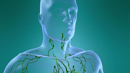 Die Lymphknoten gehören zum Immunsystem. (Quelle: Thinkstock by Getty-Images)