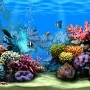 Animated Aquarium 2 Screensaver (Quelle: T-Online.de)