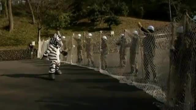 Zoo probt Zebra-Ausbruch (Screenshot: Reuters)