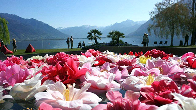 Filmfestival und Blumenpracht - Locarno ist weltweit bekannt