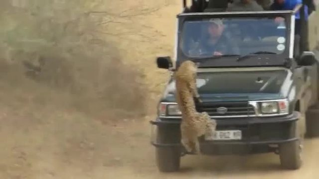 Aggressiver Leopard attackiert plötzlich Touristen auf Safari. (Screenshot: Bit Projects)