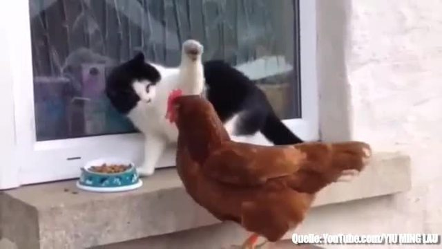 Freches Huhn klaut Katze das Futter. (Screenshot: Bit Projects)