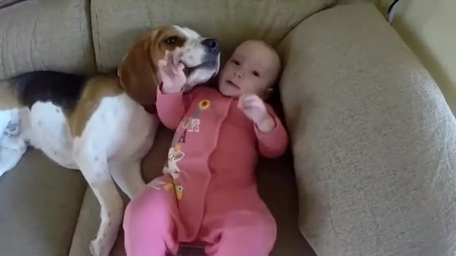 Beagle ist der perfekte Babysitter. (Screenshot: Bit Projects)