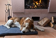 Hund am Feuer (Quelle: Thinkstock by Getty-Images)