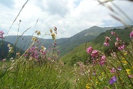 Peaks of the Balkans Trail: Blumenwiese. (Quelle: Stanislava Pavlovic Kosovic)