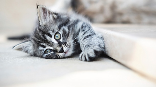 Katzen sind in Single-Haushalten am beliebtesten. Katzen sind in Single-Haushalten am beliebtesten. (Quelle: Thinkstock by Getty-Images)