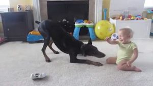 Baby schäkert mit riesigem Dobermann (Screenshot: Bit Projects)