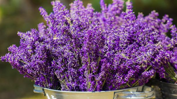 Lavendel im Topf (Quelle: Thinkstock by Getty-Images)