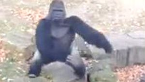 Gorilla bewirft Zoobesucher mit einem Stein (Screenshot: Bit Projects)