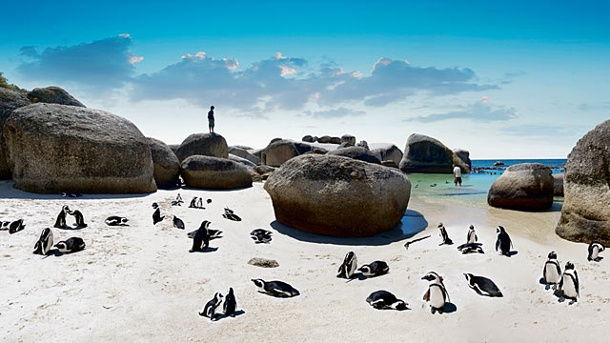 Südafrika-Special. Boulders Beach (Quelle: South African Tourism)
