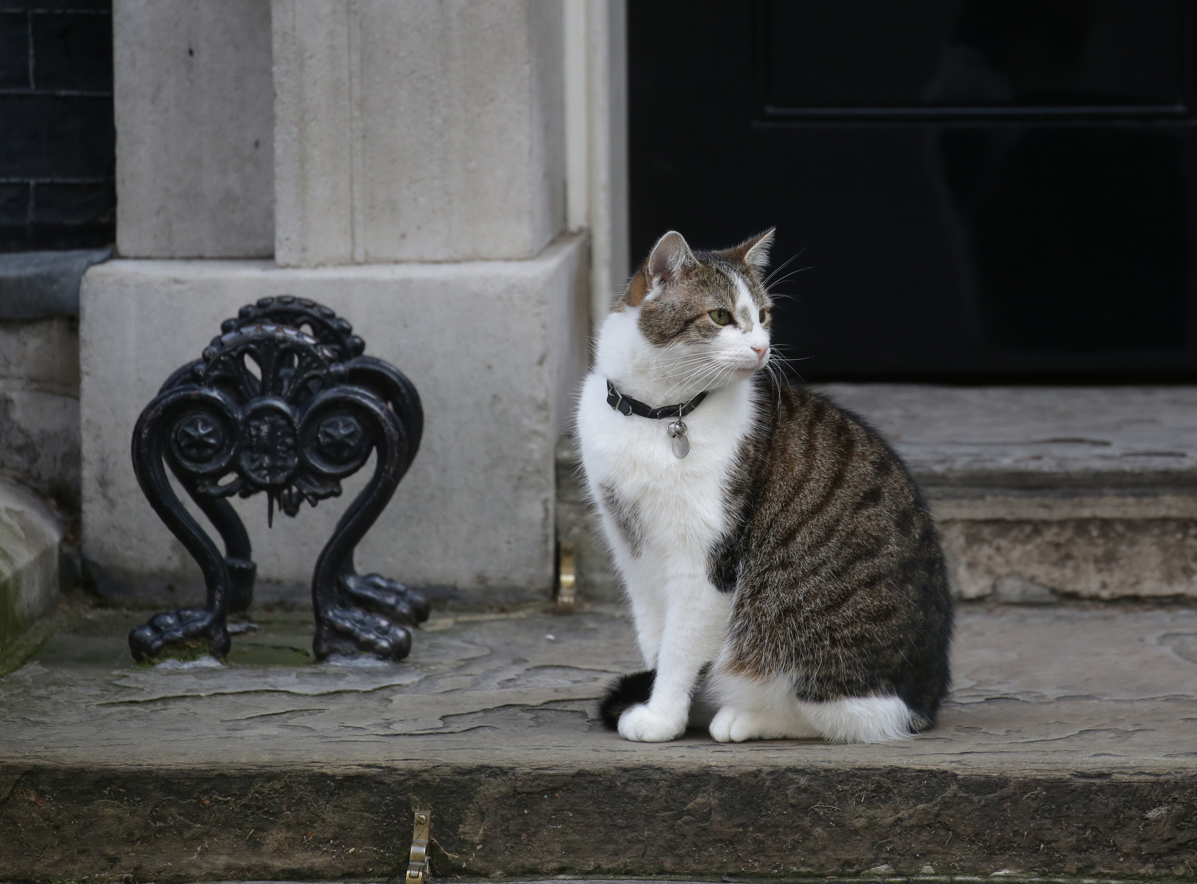 Der Chief Mouser to the Cabinet Office: Larry. (Quelle: dpa)