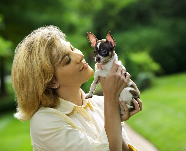Chihuahua (Quelle: Thinkstock by Getty-Images)