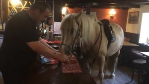 Der 7-jährige Hengst Creamy kommt mit Besitzerin Lisa Bond in den Pub in Cornwall. (Screenshot: Bulls Press)