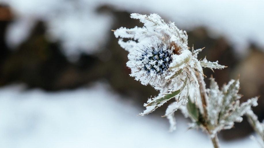Winter is here (Quelle: Thinkstock by Getty-Images/Asurobson)