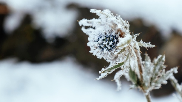 Was tun bei Frost in der Nacht, Plusgrade und Sonne am Tag?. Winter is here (Quelle: Thinkstock by Getty-Images/Asurobson)