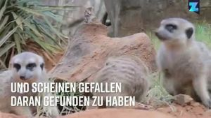 (Quelle: Zoomin.tv)