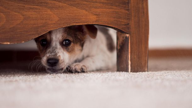 Hund unterm Schrank (Quelle: Thinkstock by Getty-Images/hidako)