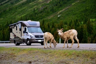 In British Columbia in Kanada begegnen Caravanreisenden schon mal wilde Tiere. (Quelle: CRD International/SRT)