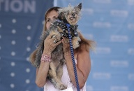 World's Ugliest Dog (Quelle: Jeff Chiu, picture alliance / AP Images)