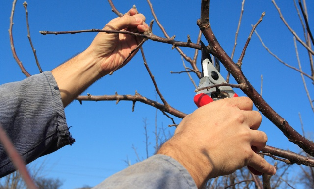 Pruning (Quelle: Getty Images/MireXa)