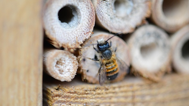 Insektenhotel: Es bietet Wildbienen ein Quartier für den Winter.  (Quelle: Getty Images/hsvrs)