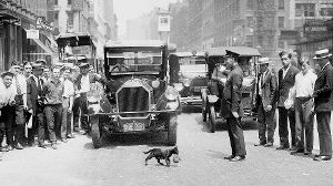 1925: Als eine Katze in New York Vorfahrt bekam (Quelle: Getty Images/Harry Warnecke/NY Daily News Archive)