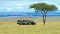 Safarijeeps an einem Einzelbaum in der Savanne Kenia Masai Mara Nationalpark safari jeeps beside a