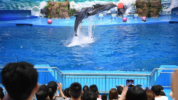 190710 GUIYANG July 10 2019 Visitors watch the performance by dolphins at a seaworld in (Quelle: Imago)