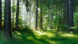 Wald (Quelle: Thinkstock by Getty-Images/ AVTG)